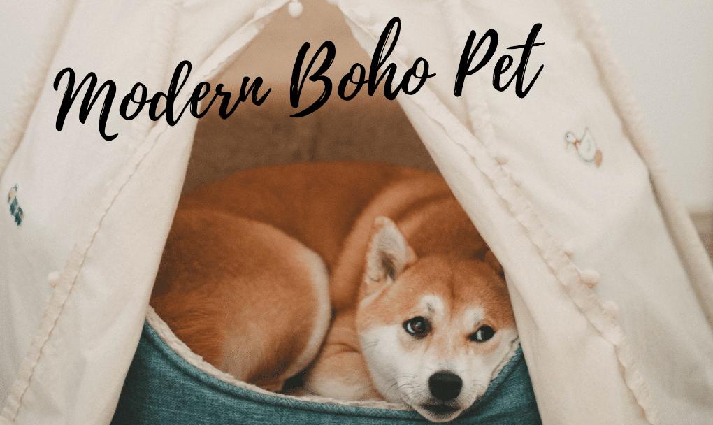 Modern Boho Pet Accessories