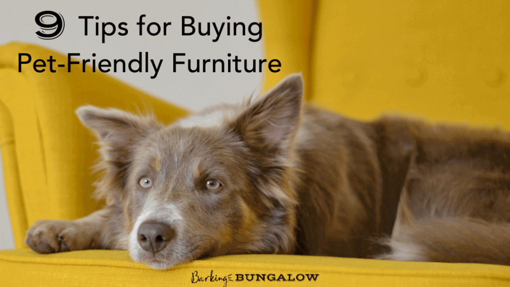 9 Tips For Buiying Dog Friendly Furniture