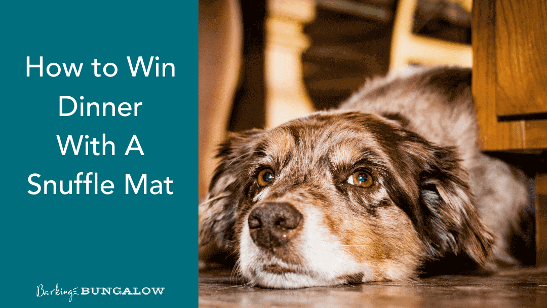How to Win Dinner with a Snuffle Mat