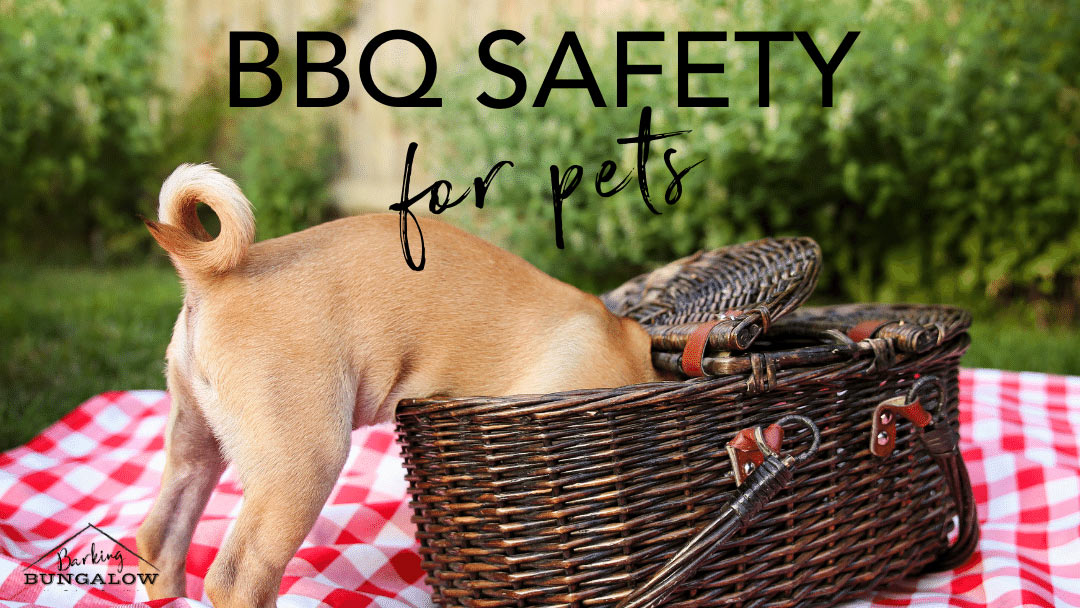 BBQ Safety for Pets