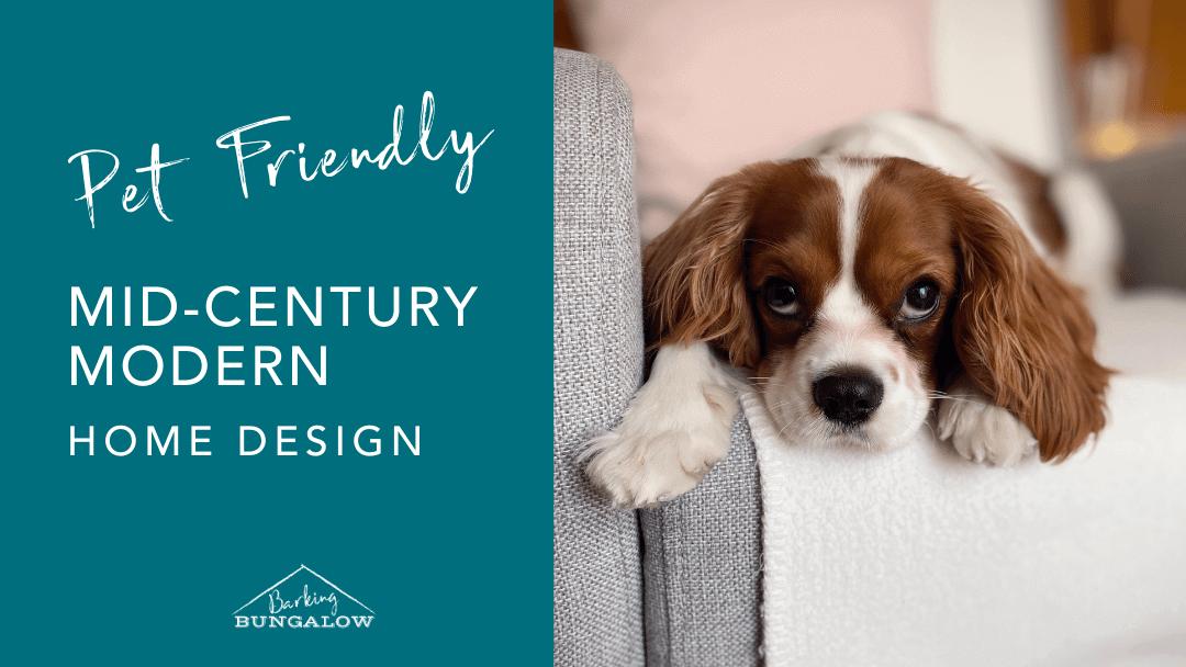 Mid-Century Modern: Pet-Friendly Design Guide
