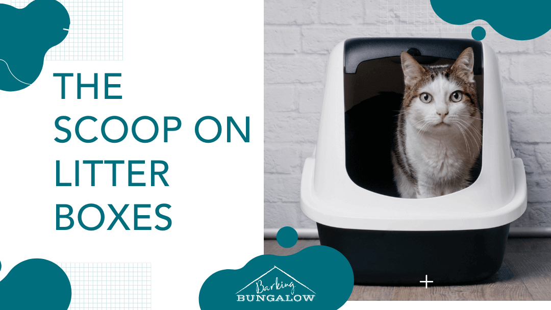 The Scoop On Litter Boxes
