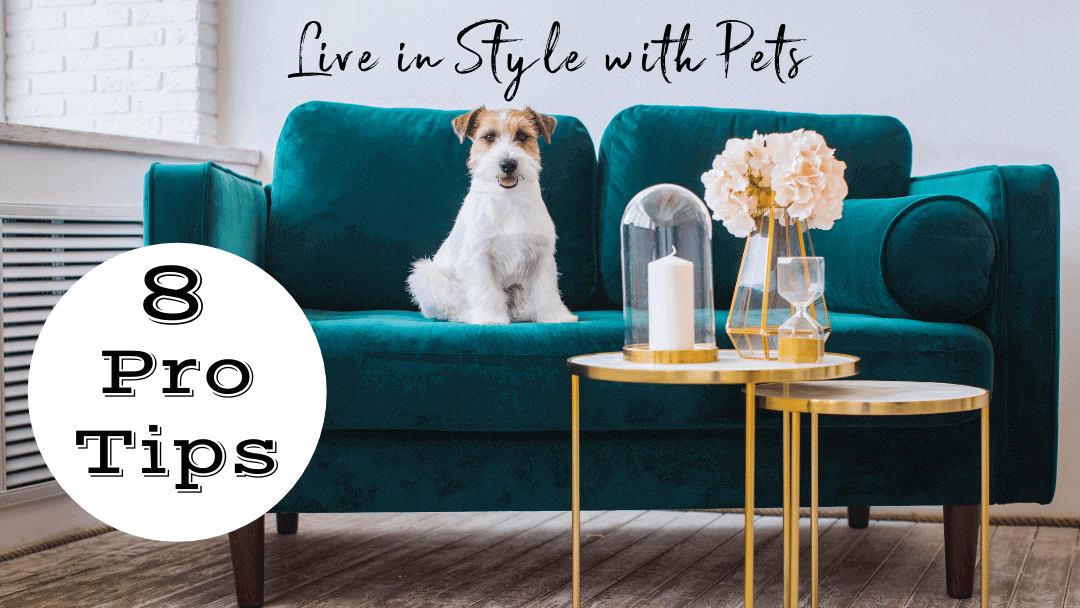 Pro Tips: Living in Style with Pets