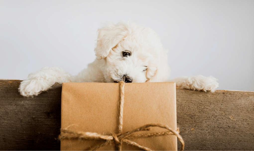 PAWTHER'S DAY GIFT GUIDE
