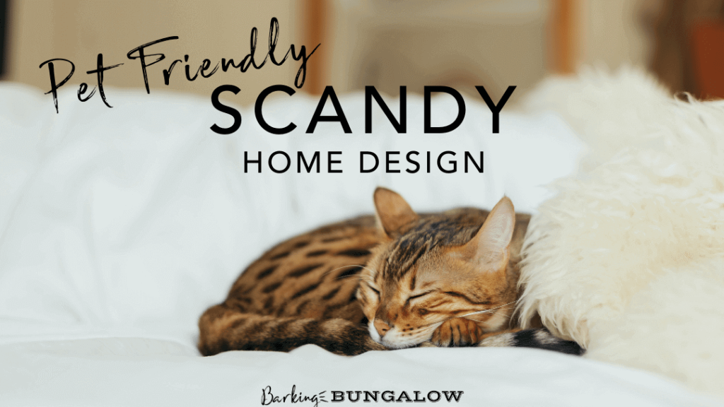 Pet-Friendly Scandy Design
