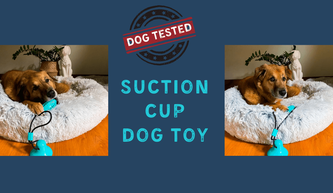 The Suction Cup Dog Toy – Reviewed by Four Dogs