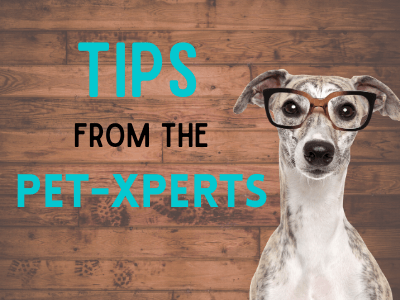 Tips From Pet-experts