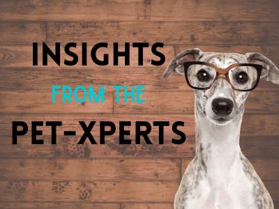 Pet-expert Insights