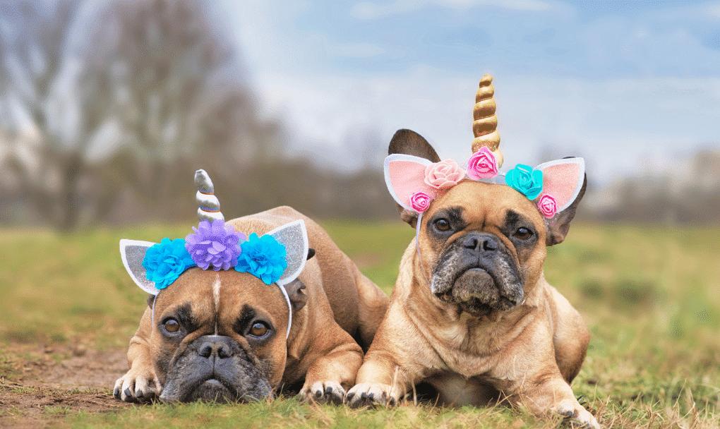 best unicorn dog costume