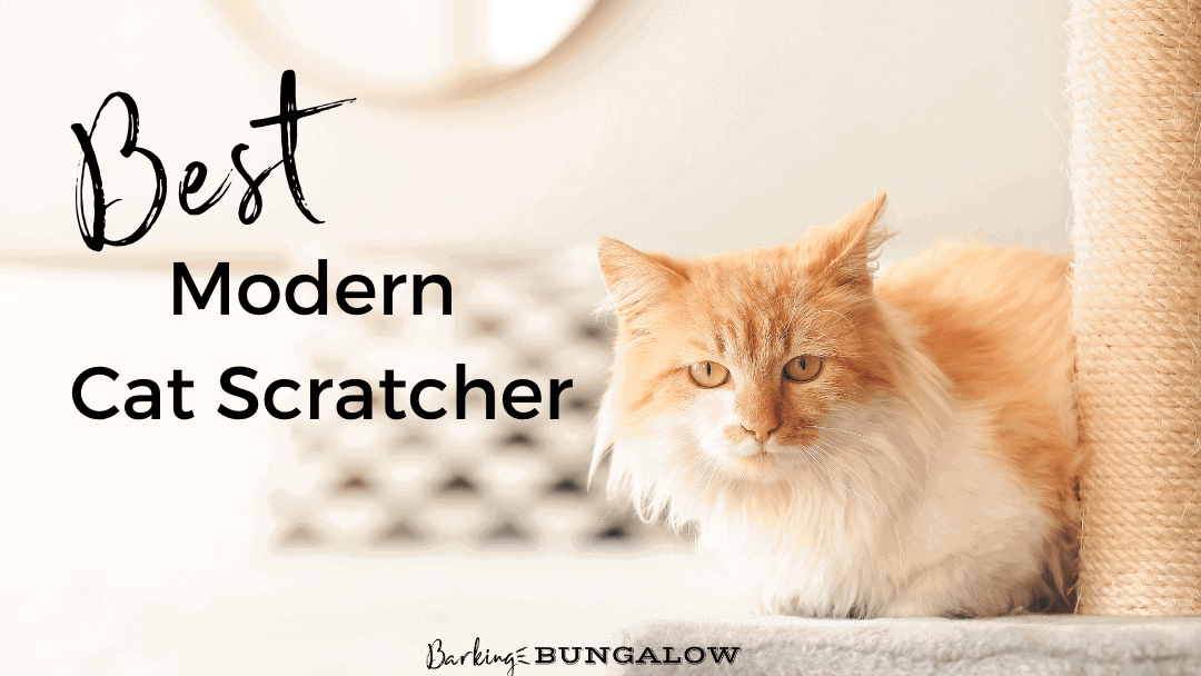 The Best Modern Cat Scratchers for a Happy Cat and Stylish Home