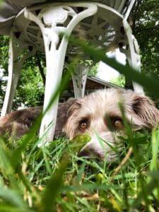 Backyard Doggie Playdate Set-Up