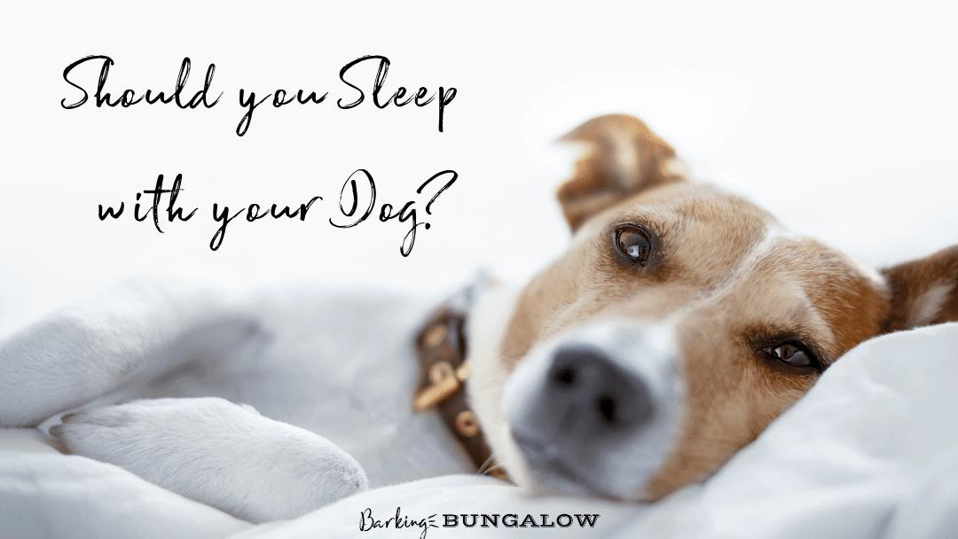 Should You Sleep With Your Dog?