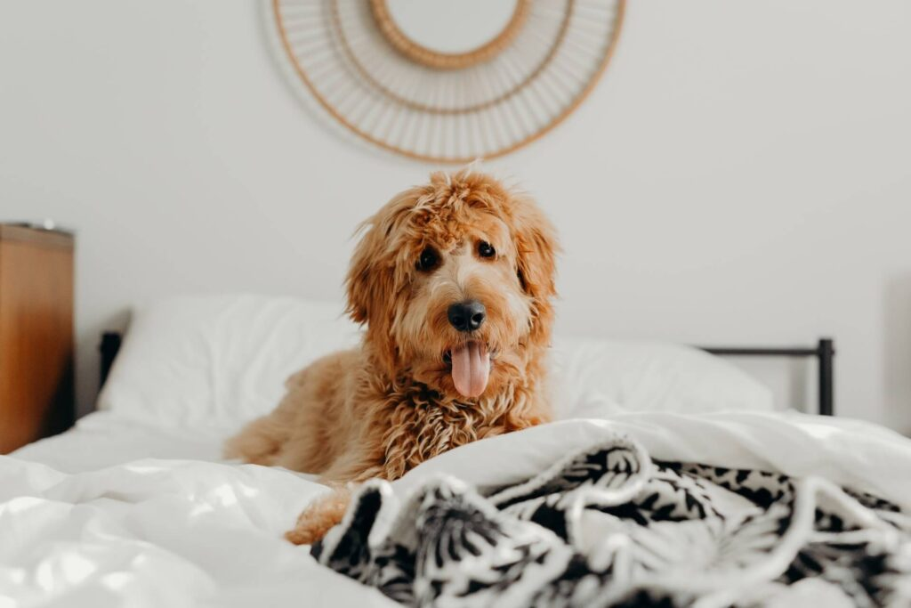 Should you sleep with your pet