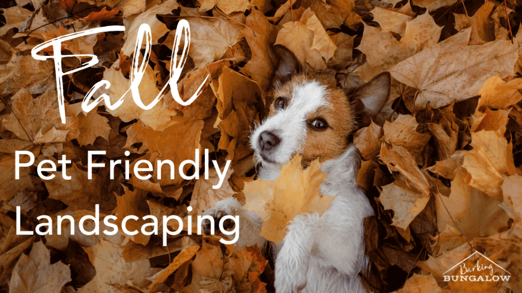 Fall Pet-Friendly Landscaping