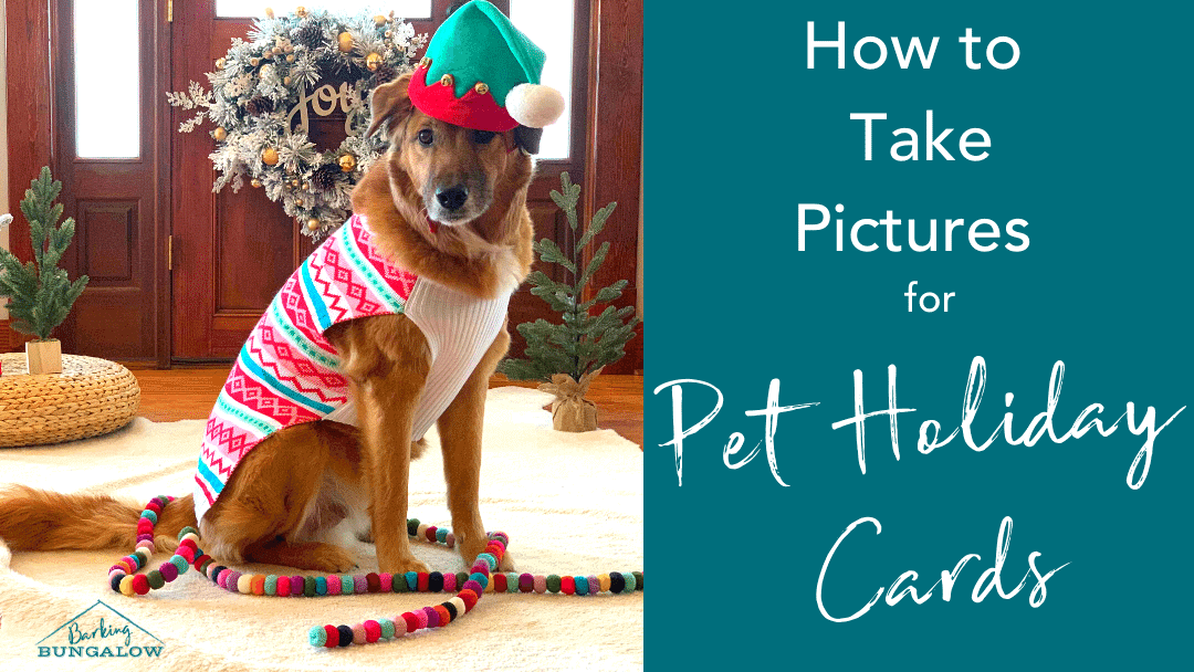 How to Take Pictures for Pet Holiday Cards