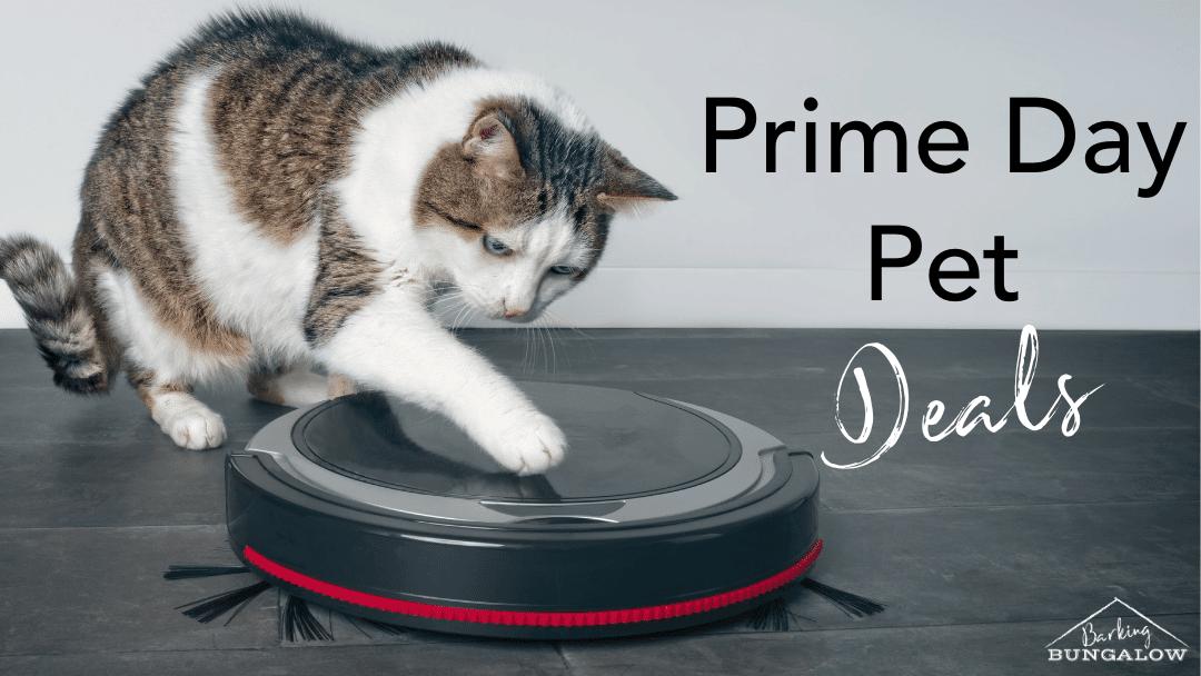 Prime Day: Score Your Favorite Prime Pet Needs