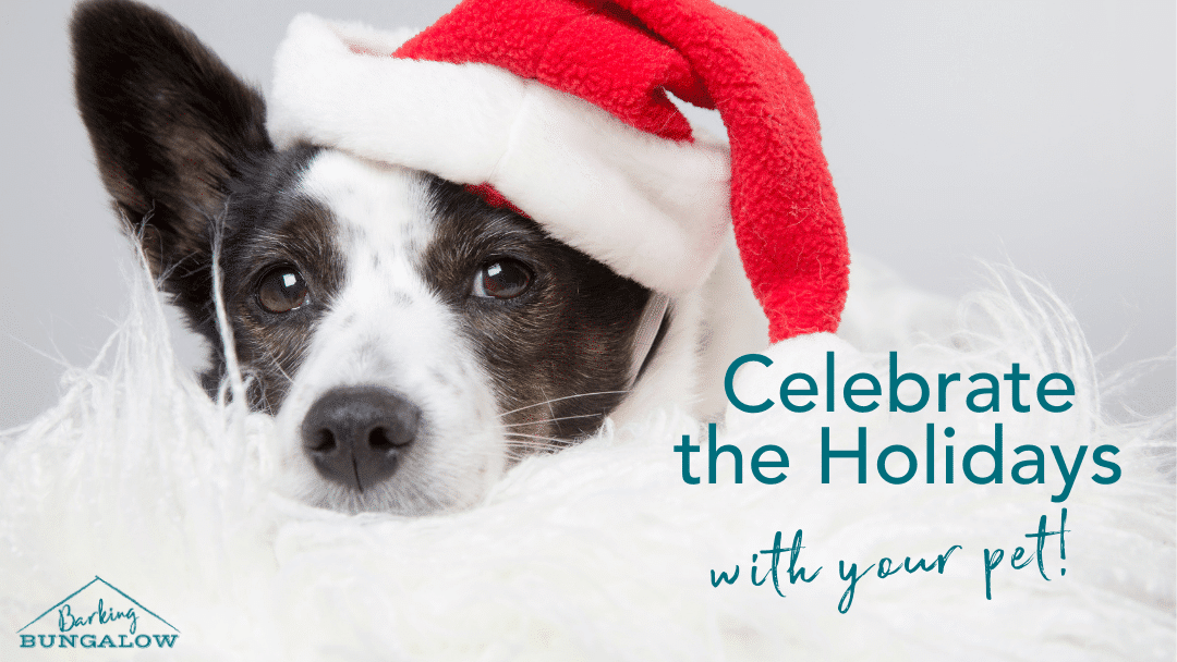 9 Ways to Celebrate the Holidays With Your Pet
