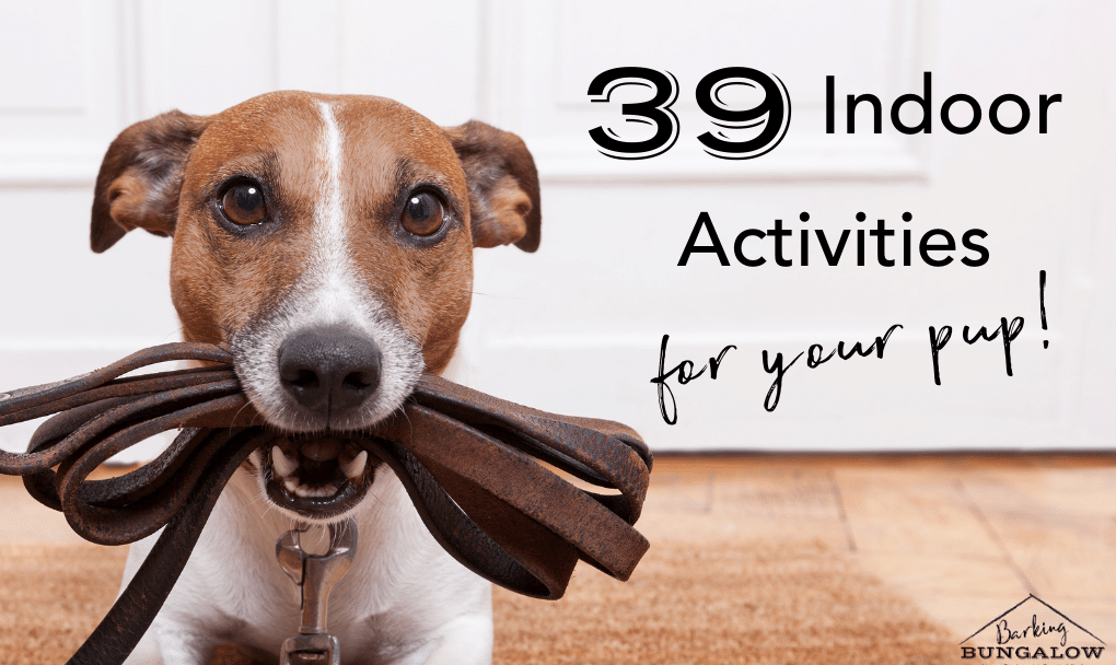 39 Easy Things to Do with Your Dog Indoors