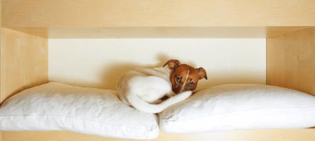 Minimalist Dog
