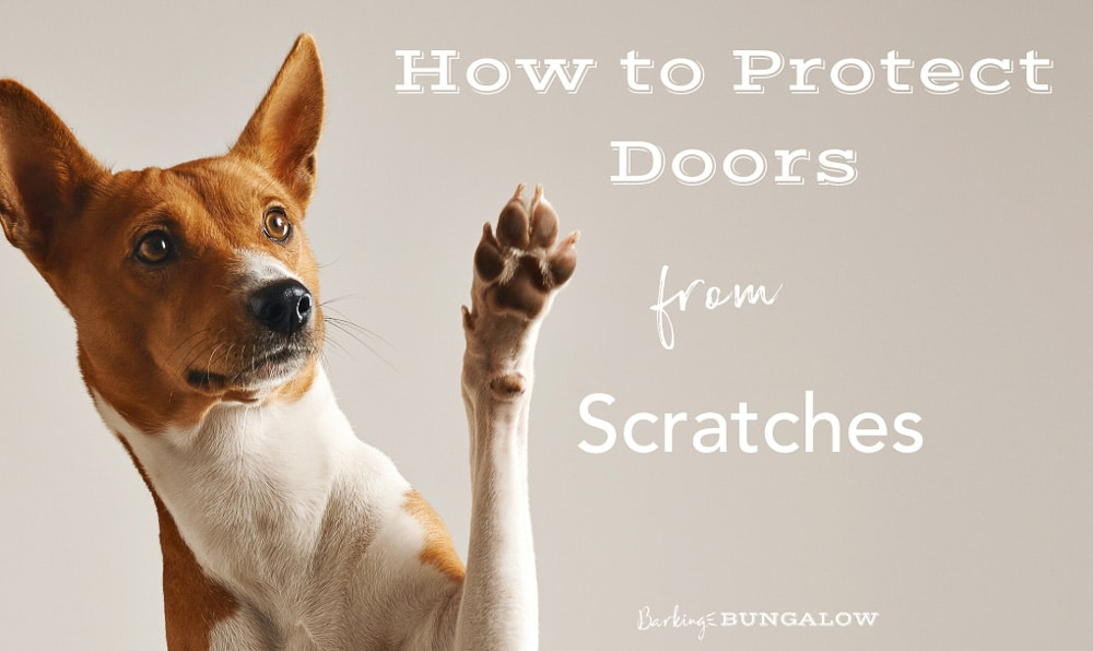 How to Fix and Protect Doors From Dog Scratches