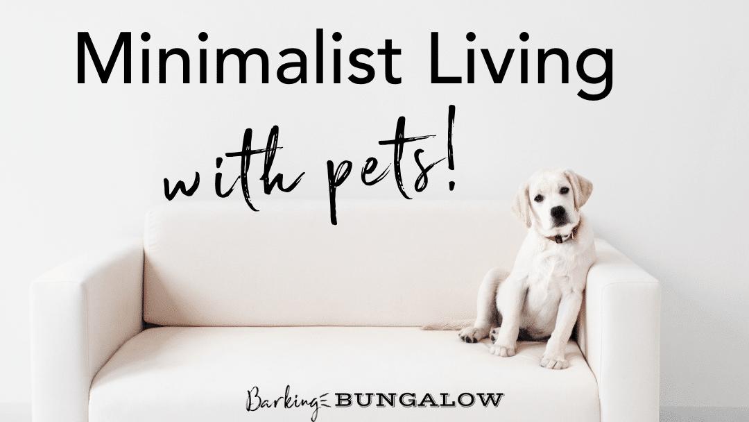 Minimalist Dog: Creating a Modern Pet-Friendly Home