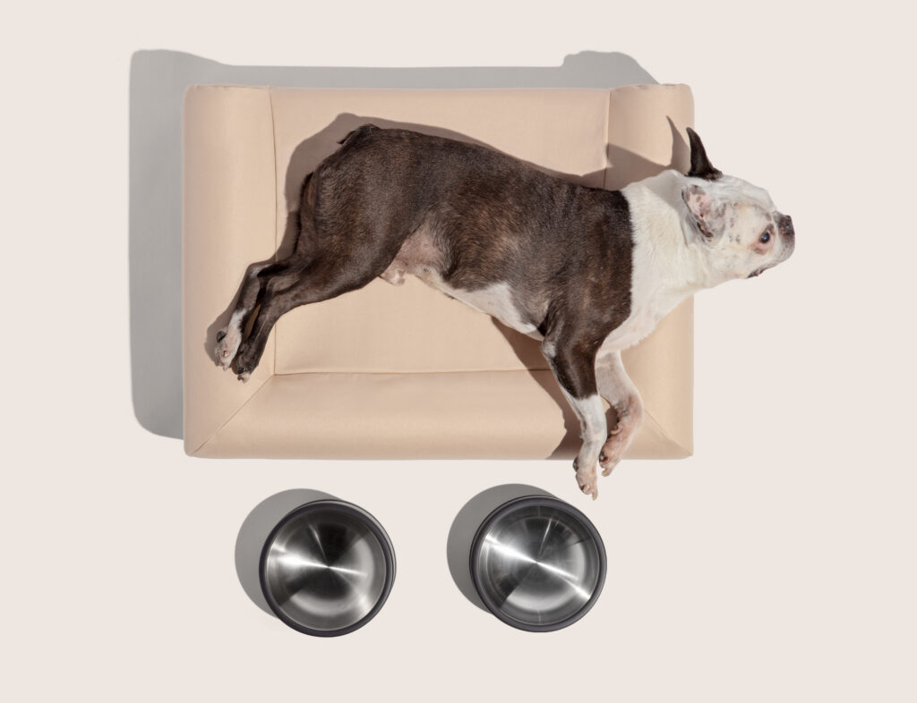 Modern Dog: Wild one bed and bowls