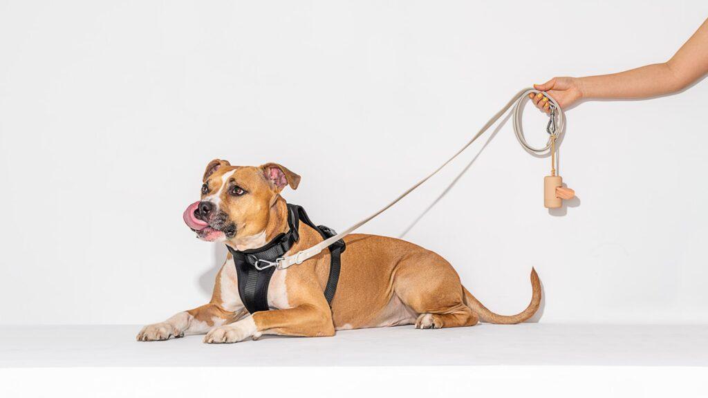 Modern Dog: Wild one Walking kit
