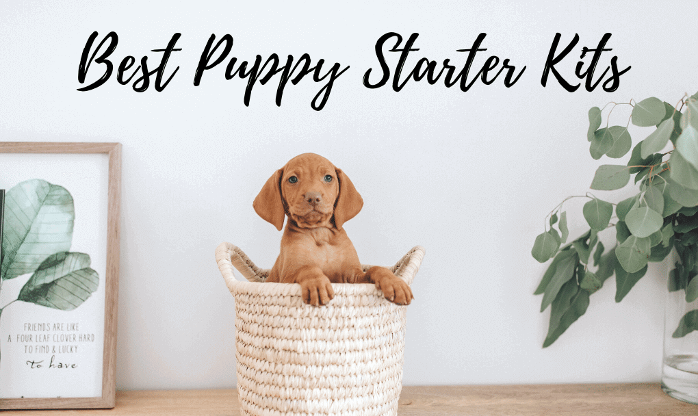 5 Best Puppy Starter Kits: Everything You Need for Your New Puppy!