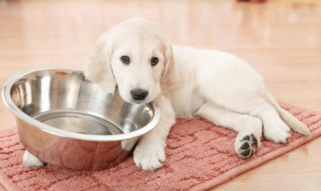 Best Puppy Starter Kit
