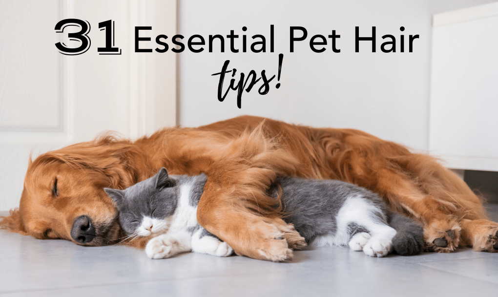 31 Essential Pet Hair Remover Tips You Need Right Now