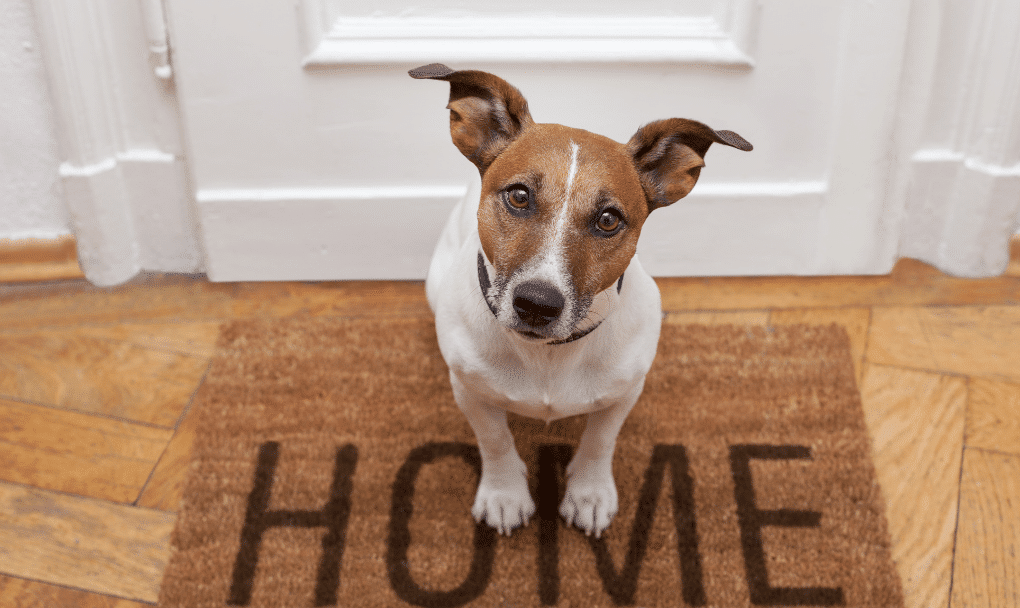 Complete Guide to Buying a New Home with Pets