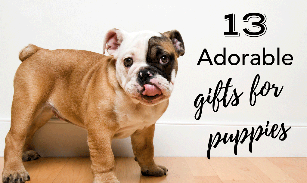 13 Adorable Gifts for Puppies and New Dogs That They Actually Need