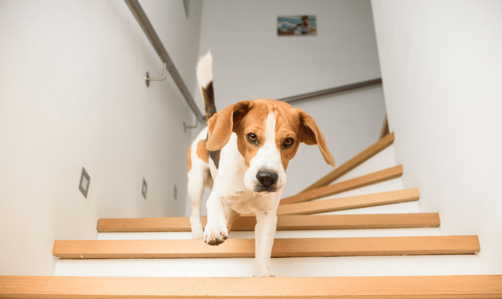 Buying a Home With Pets