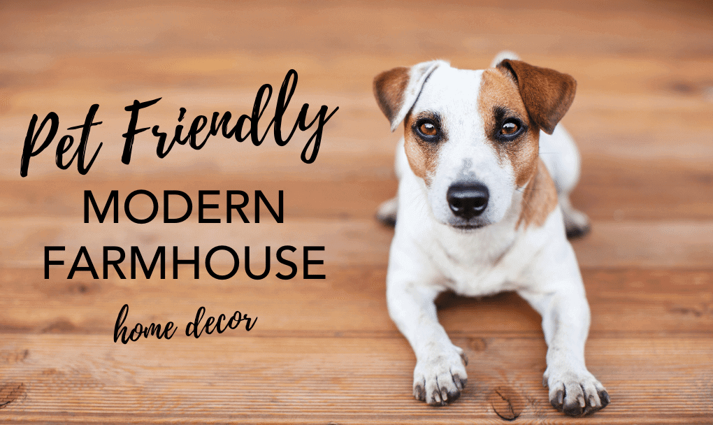 Modern Farmhouse Design with Pets – Simple and Gorgeous Pet-Friendly Decor