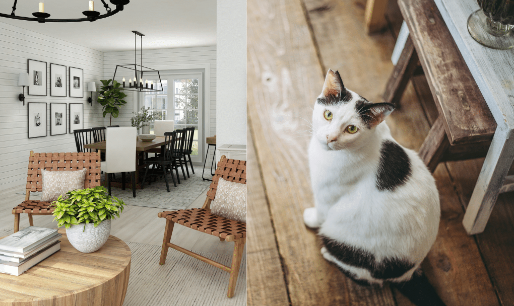 Modern Farmhouse Design with Pets