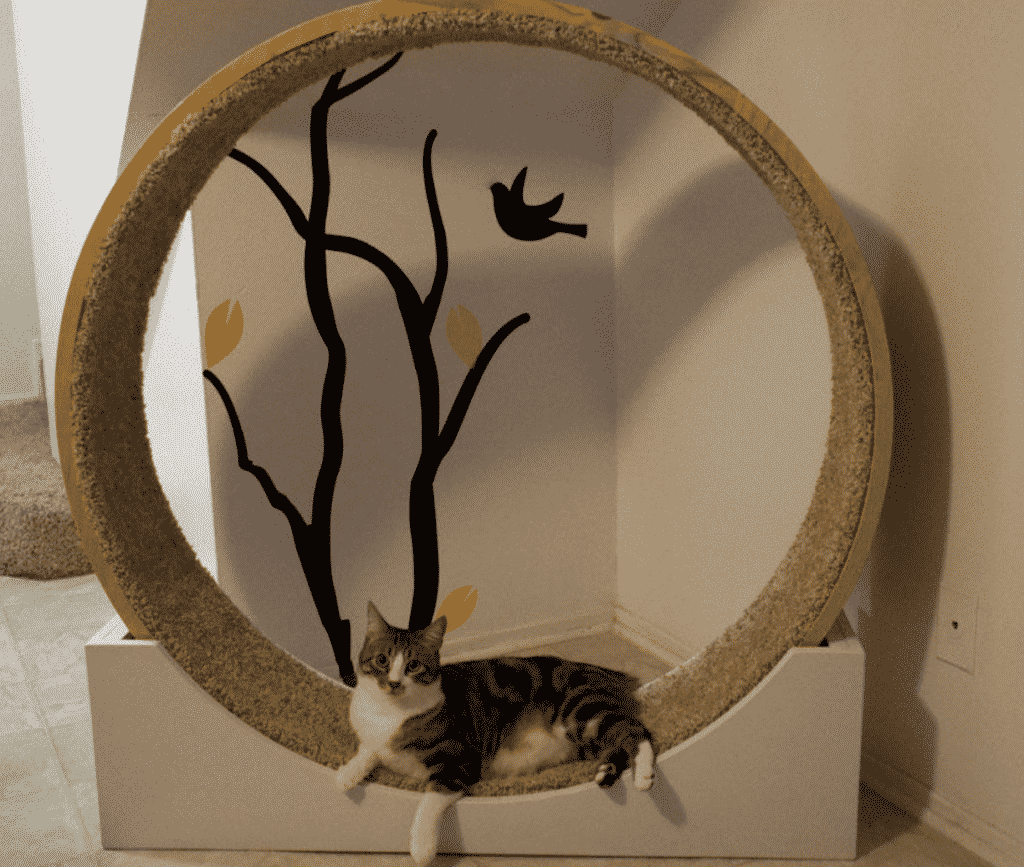 cat exercise wheels