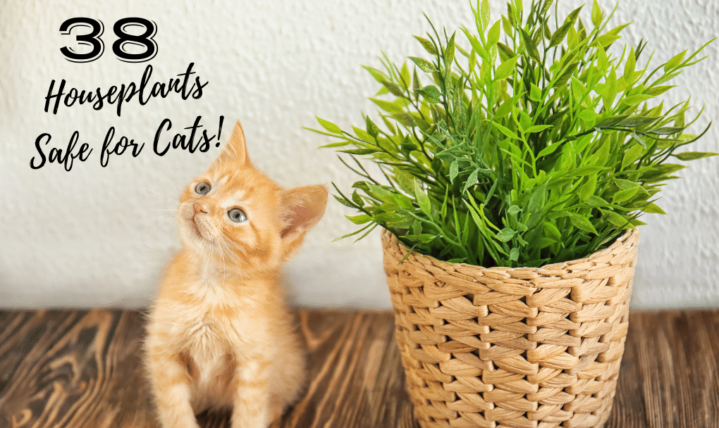 How to Love your Cat and Have Gorgeous Houseplants